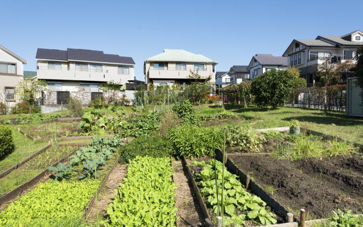 「宅地から農地に転用」という選択肢もアリ! 空き家解体後の土地活用